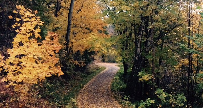 A trail with autumn leavs